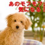 アリースター誕生のモフモフ犬が超カワイイ!犬種は何?誰の犬?