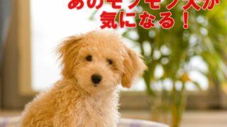 アリースター誕生の犬