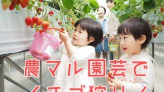 農マル園芸でイチゴ狩り