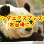 パンダエクスプレスがダイバーシティ東京プラザに!営業時間や評判は?